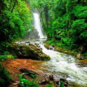 Doka Coffe Tour & La Paz Waterfall Gardens