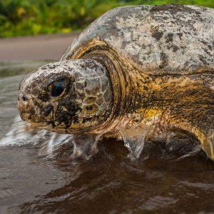 Costa Rica Silvestre
