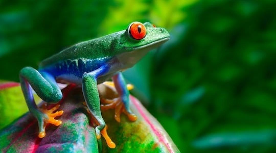Costa-Rica_National-Park-cARARA