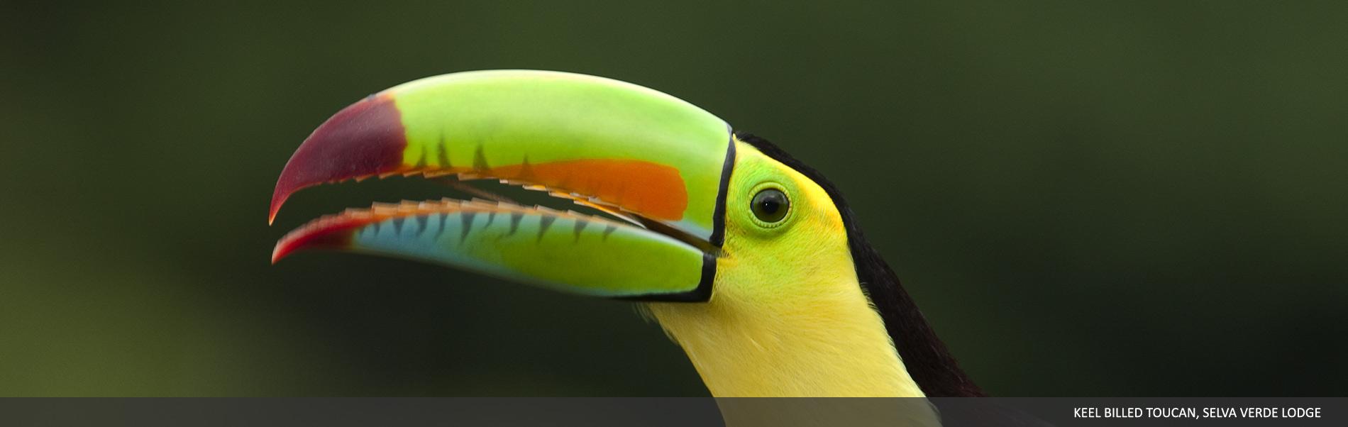 selvaverde-costarica-00