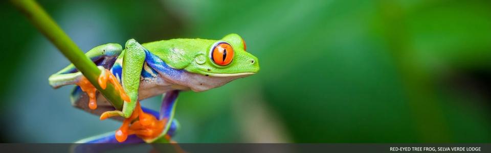 selvaverde-costarica-01